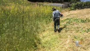 Weeds Clearing Defensible Space Near House in San Ramon