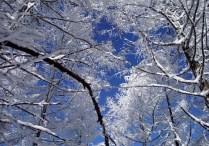 樹氷が美しい。