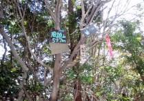 山頂の木々にも処狭しと看板が。。