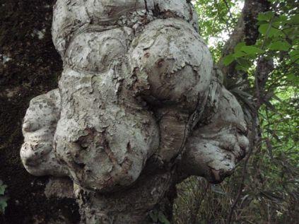 木コブのいろいろのカオ。
