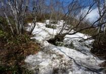 金糞岳直下の雪田。