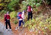 林道から登山道への入り口が分かりにくい。