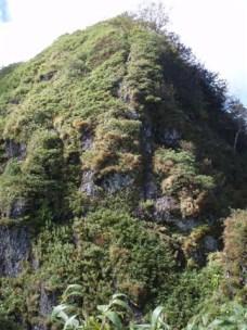 33‐本院岳からの下りは泥壁の急下降、笹が頼り。