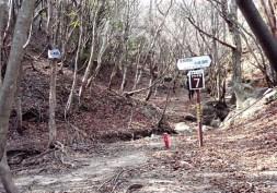 ⑧登山道との合流地点。