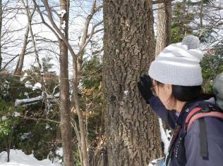 20あべまきの木