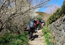 02.登山口は白梅の歓迎