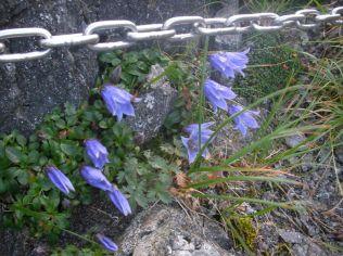 鎖場に、綺麗な花
