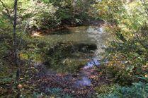 35 カクレ葉池