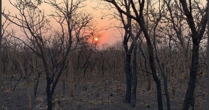 Incendios en el Amazonas: crean un equipo especial y habrá marchas en todo el mundo