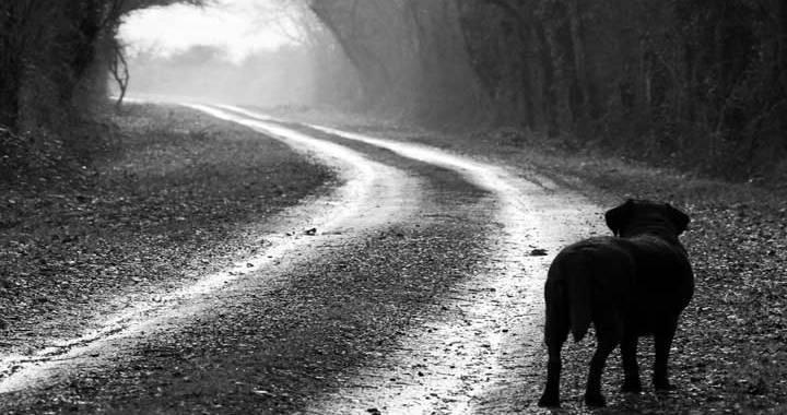 A poner en práctica: Una comuna santafesina denunciará a quienes abandonen perros en la ruta