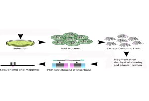 The TraDIS method involves a process of transposon insertion, pooling of individual mutants, extracting genomic DNA and making sequencing libraries then sequencing.