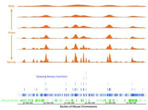 A snapshot of the mathematical framework using Gaussian kernels (orange peaks) to identify clusters of insertions  (blue bars) that lead to cancer by disrupting the function of genes (green bars). Click for larger image.