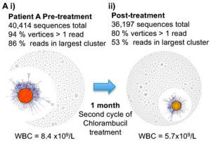 The B-cell sequence networks for a patient with chronic lymphocytic leukemia (i) prior to and (ii) after second cycle of treatment. Credit: DOI: 10.1101/gr.154815.113