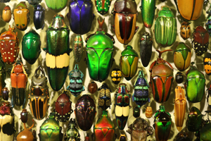 There are believed to be approximately 1-1.5 milllion different species of beetles