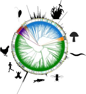 The family tree of life of life on earth. Ancestral tree courtesy of the Earth BioGenome Project