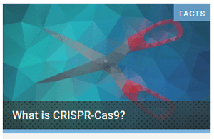 Explanation of CRISPR genetic editing tool on our sister site: yourgenome.org – NOTE: opens in a new window