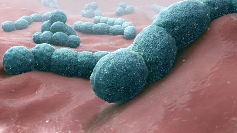 Streptococcus pneumoniae - A causative bacteria of meningitis. Source: http://www.scientificanimations.com/wiki-images/