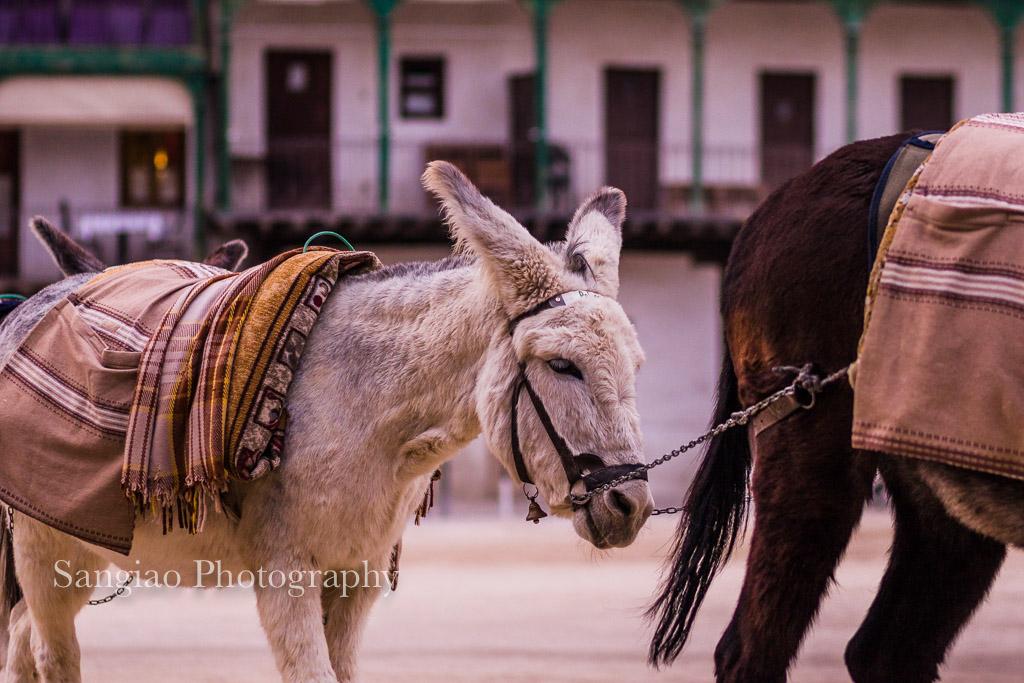 burro chinchón turismo madrid
