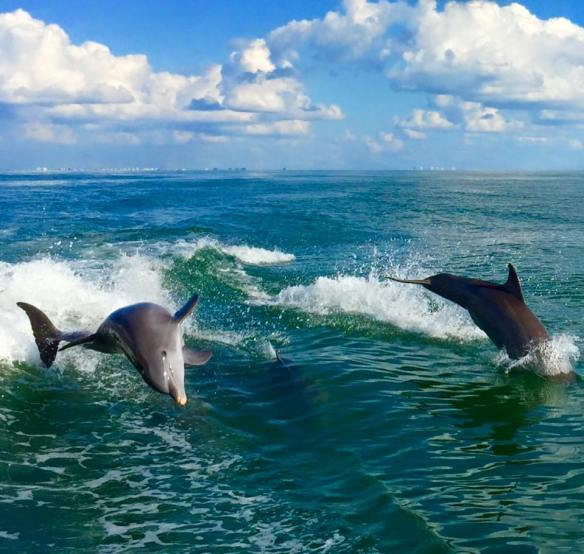 dolphins 11-6-15