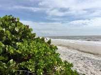 beach 11-02-18
