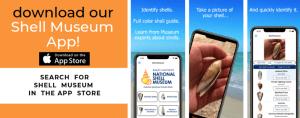 banner-shellmuseumapp