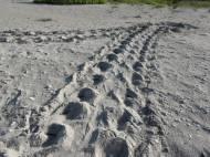 Turtle Crawl
