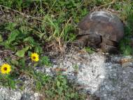 TurtleWalking