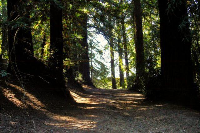 Oakland Redwood Forest