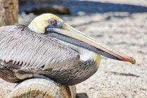 Seaside Seabird Sanctuary Sitting