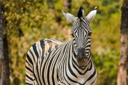 Safari-West - -02815