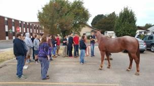 horse-story