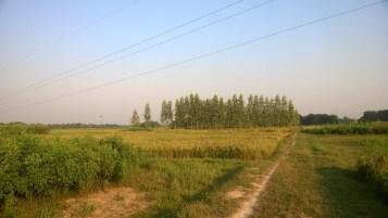 Farms & Trees