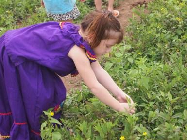 Tigres picking flowers