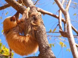 Neighborly Sloth