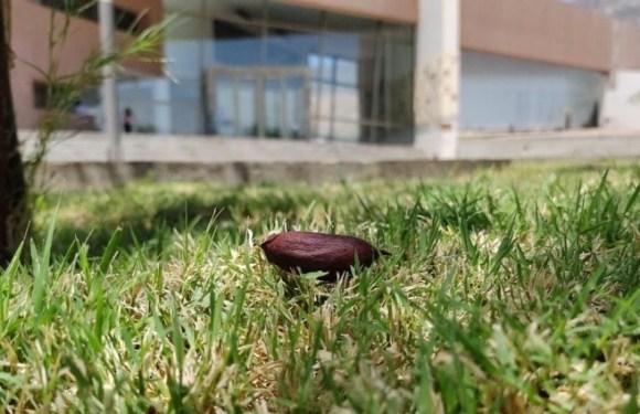 Continuarán forestando Anchipurac con semillas producidas por árboles del Centro Ambiental