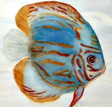 Discus (Pompadour Fish)