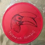 palawan-hornbill