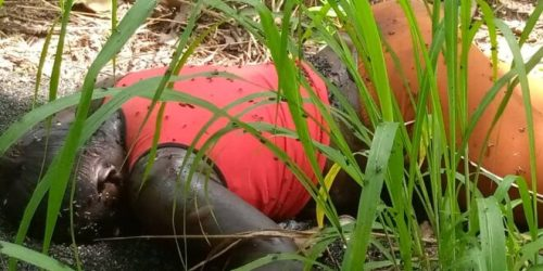 Murder at Atwima Agogo