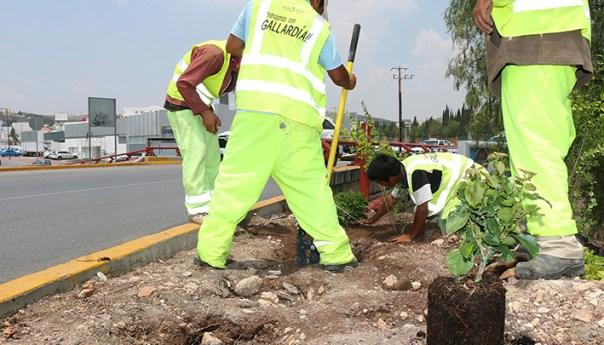 Limpia el Ayuntamiento más de 32 mil Metros de Terrenos