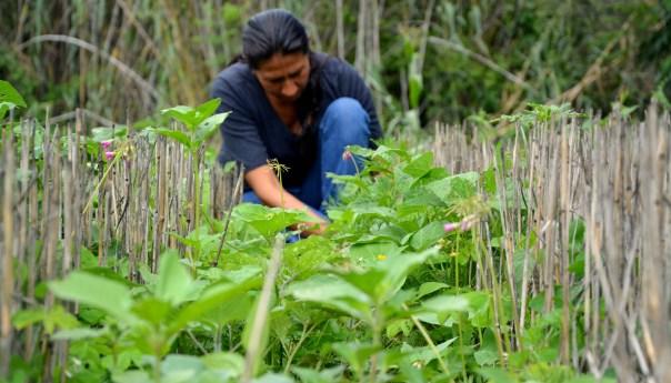 Logra programa MasAgro impactar en más de 300 mil productores y más de un millón de hectáreas