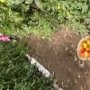 10 millones de toneladas de productos agrícolas se producen en san luis potosí