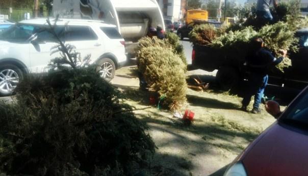 Siguen en funcionamiento centros de acopio para árboles de navidad