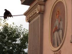 San Mauro e lo spettacolo dei rapaci