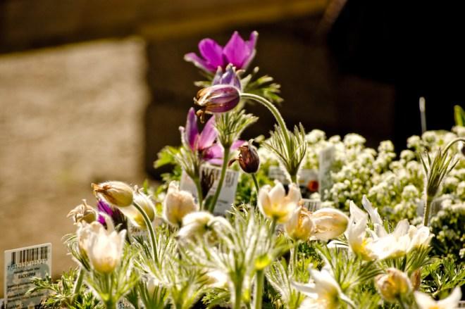Allting som är lila är ju vackert