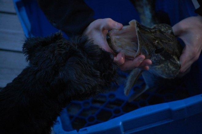 Otto ville verklign ha den här fisken..