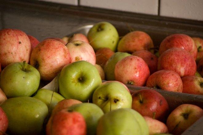 Steg 1. Hälla upp äpplena i diskhon från Konsumväskan jag plockat dom i från träd och mark