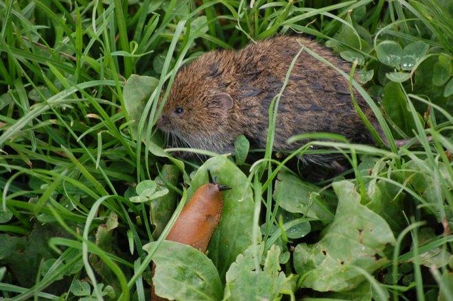 Sorken huttrade mitt på den öppna gräsmattan och snigeln kom för att hålla honom sällskap i en svår period.