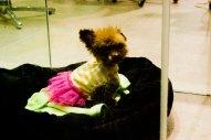 Shangdu_Soho_Dogs_Beauty_Salon
