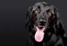 Сънища за кучета