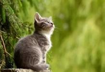 Сънища за котки